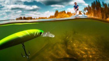 mồi câu cá