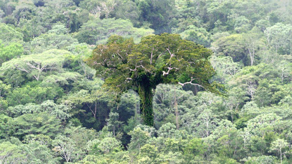 châm ngôn đầu tư: một cái cây
